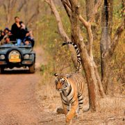 ranthambhore-wildlife