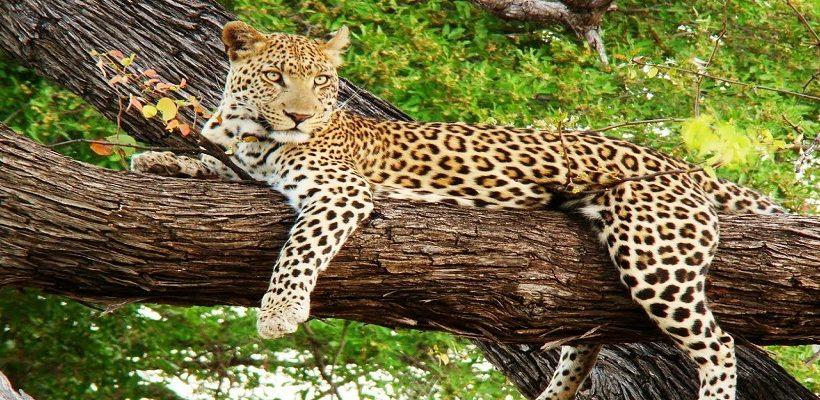Mahananda-Wildlife-Sanctuary-Dooars-Region