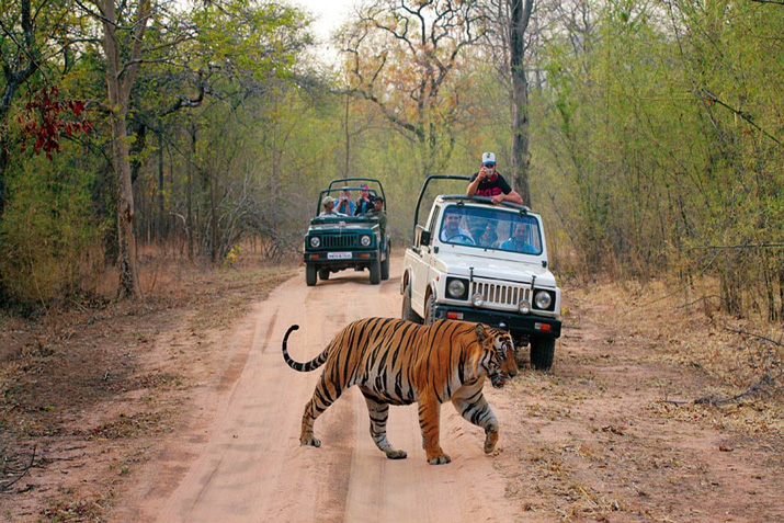 Ranthambore-National-Park-in-Rajasthan