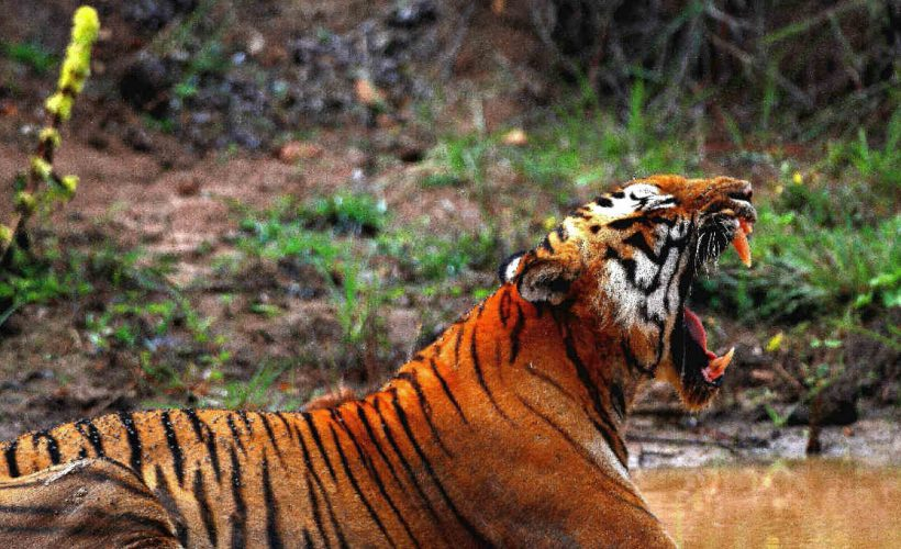 south-indian-wildlife-parks-feat