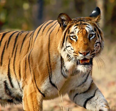 wildlife_sanctuaries