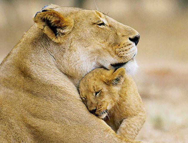 wildlife_sanctuaries_of_india-631×480