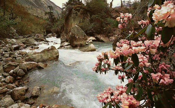 Singba-Rhododendron-Sanctuary